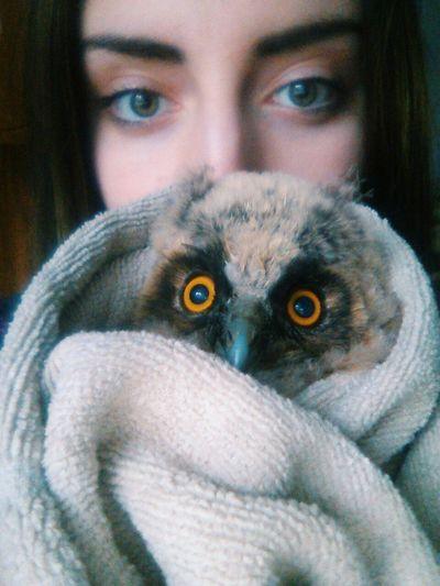 Eyes Love Big Brown Eyes Birds Owl Animals Cute Pets Girl Enjoying Life