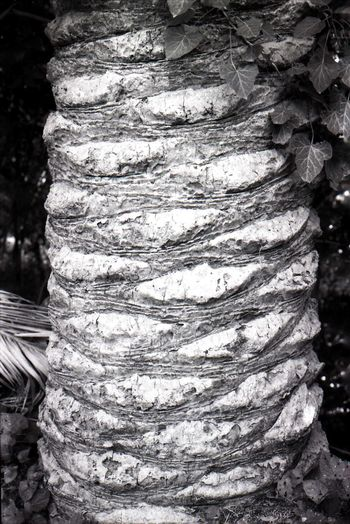 пленка Fomapan100 Ishootfilm Filmsnotdead Film Rough No People Stack Tree Trunk Outdoors Tree Food