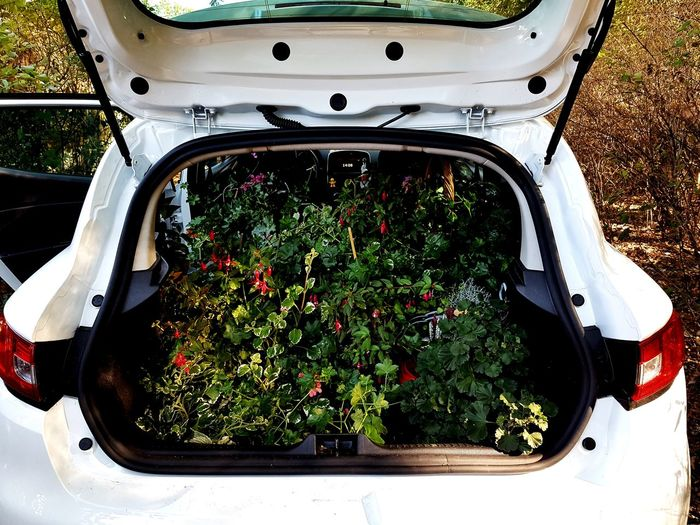 Flower Car Water Close-up Vehicle Green Color Blooming Plant Life