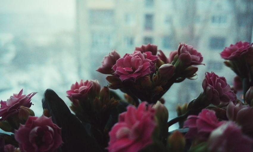 Flowers Home Warm Nice Beautiful