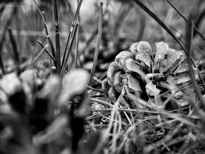 Nature Bnw_nature Bnw Monocrhome Blackandwhite Photography Black & White Bnwphotography Hanging Out Taking Photos Check This Out Hello World 2016 Nyhamnsläge Sweden Photography Insperation! Popular Photos Photo Amazing Amazing_captures Photooftheday Photographer Like Amazing_bw Amazingday