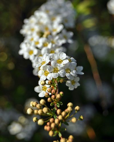 Beautiful nature Spring Into Spring White Flowers Sommerfeeling Focus