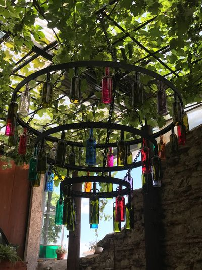 Agora Meyhanesi Asma üzüm Rakı Balat Tarihi Gezi Nature Tree No People Building Exterior Architecture Growth Hanging Day Historical Meyhane Istanbul AgoraMeyhanesi