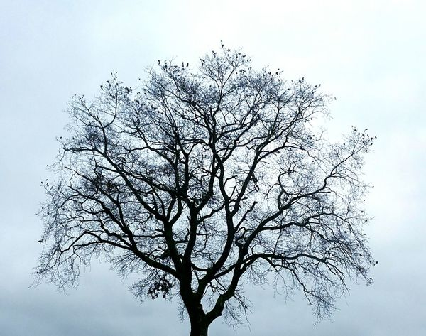 Winter Death Branch Tree Nature Low Angle View No People Sky Outdoors Beauty In Nature Day Bare Tree