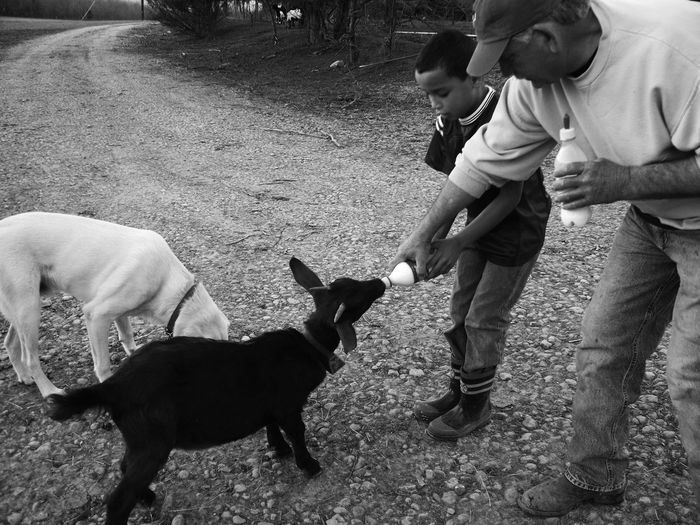 Animal Themes Baby Bonding Childhood Day Dog Domestic Animals Kid Goat Leisure Activity Lifestyles Mammal One Animal One Person Outdoors Pet Owner Pets Real People Standing