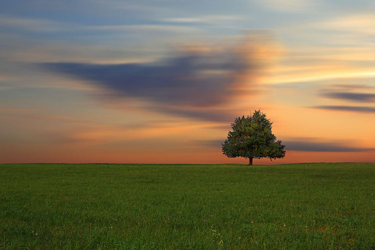 Lonely tree with animated clouds in sunset Outdoor Season  Animated Clouds Lonely Tree Sunrise And Clouds Sunrise Beautiful Nature Beautiful Autumn Outdoors No People Idyllic Nature Grass Non-urban Scene Orange Color Growth Landscape Tree Environment Cloud - Sky Tranquility Tranquil Scene Land Sunset Field Scenics - Nature Plant Sky Beauty In Nature