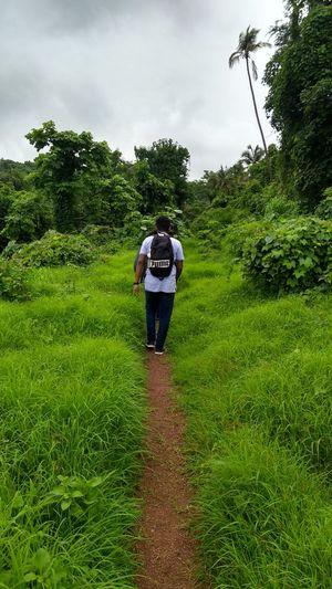 Rear view of man walking on trail