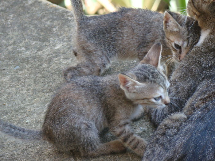 Close-up of cats sitting outdoors