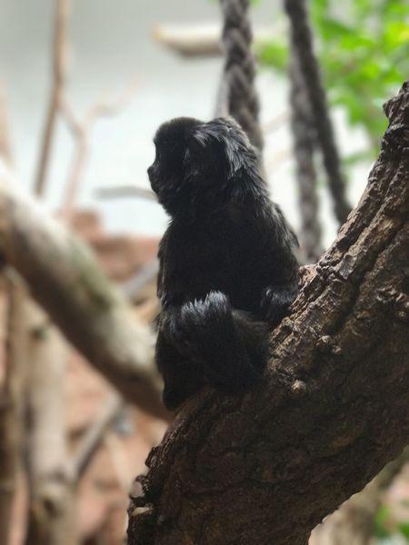 One Animal Animal Themes Focus On Foreground No People Monkey Zoo Frankfurt IPhone Photography