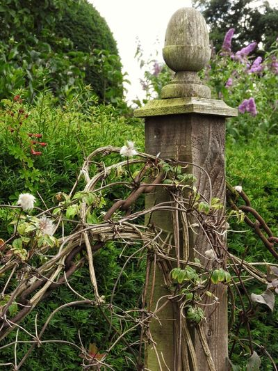 This caught my eye. I think it's the texture of the wood, the dry stems and the rusty chain. Wooden Post Wood Texture Rust Rusty Chain Dry Stems Plants Climbing Plant Garden Photography Nature Seed Heads Clematis Buddleia Textures And Surfaces