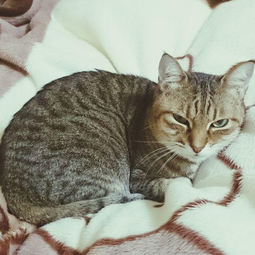 こころたん一日中ありさの部屋にいるけど、トイレとかごはんとかいいのか!? My Cat<3 Cute♡ Love ♥