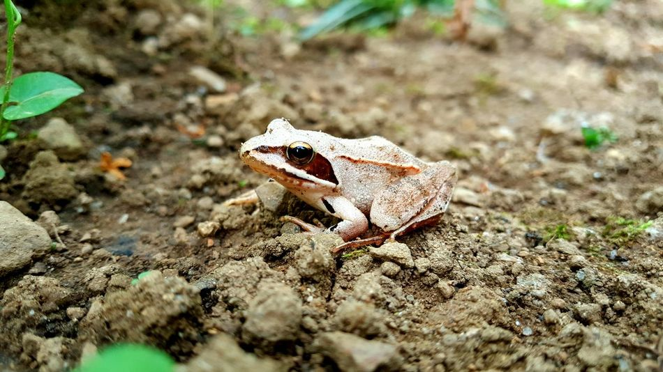 Dirt Green Frog King No People Animals In The Wild Animals