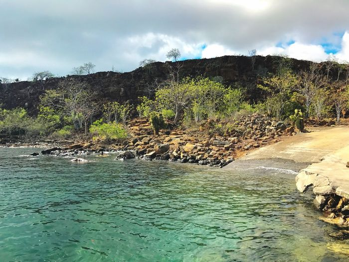 Landscape Trees Cactus Green Water Galapagos Islands Baltra Island Water Clouds And Sky Sky Cloud - Sky Nature Tree Beauty In Nature No People Outdoors Tranquility Day Scenics Shore Dock Rocks