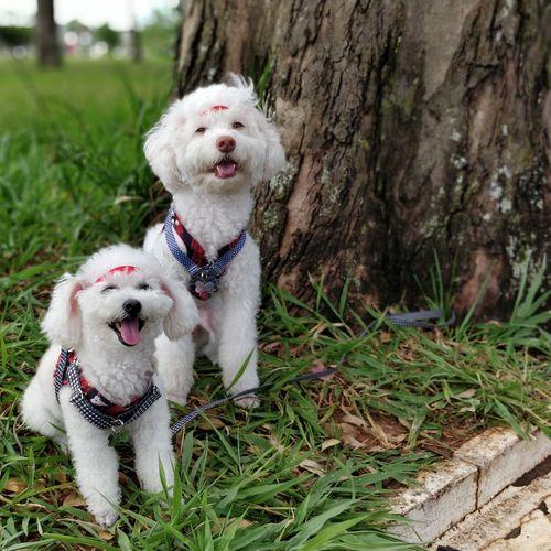 Carnaval 🎭 Dog Pets Domestic Animals Animal Themes Pet Collar Grass One Animal Pet Clothing Tree
