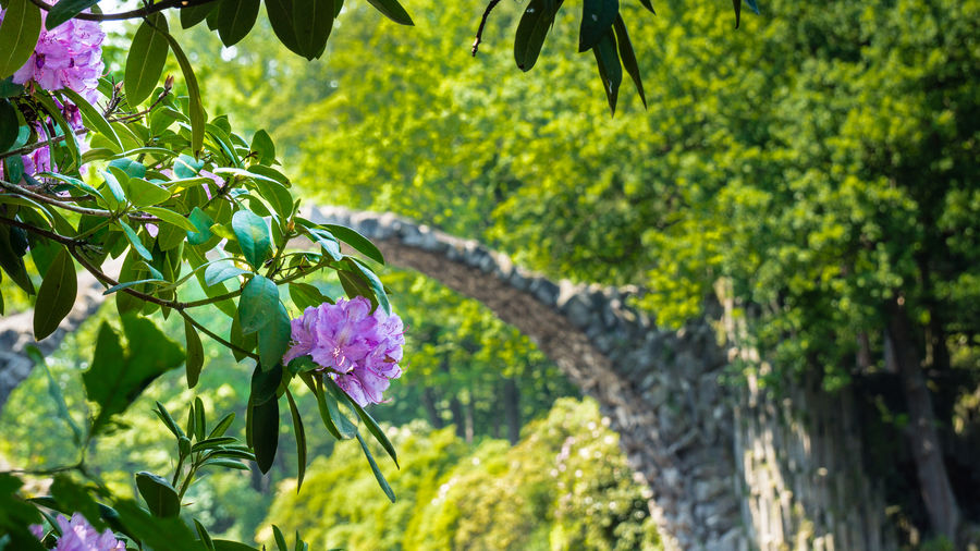 Beauty In Nature Blooming Botany Flower Flower Head Focus On Foreground Fragility Freshness Green Kromlau Nature No People Tranquil Scene Tranquility Tree