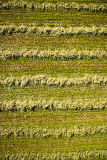 Dry hay for animal feed in open field in summer Dry Drone  Top View Field Straw Hay Grass Landscape Background Natural Rural Summer Agriculture Meadow Land Season  Outdoors Feed  Nature Rural Scene Backgrounds Day Non-urban Scene Plant Scenics - Nature Beauty In Nature