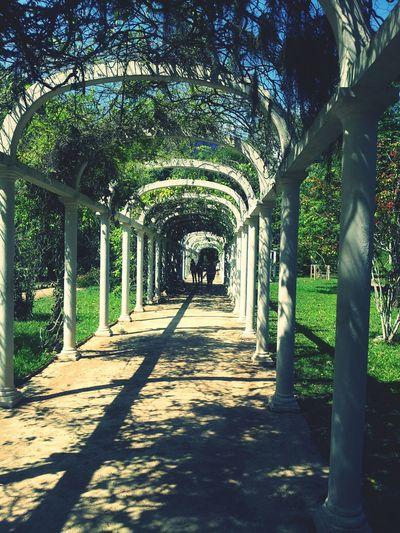 Botanical Jardim Botânico - Rio De Janeiro Hello World