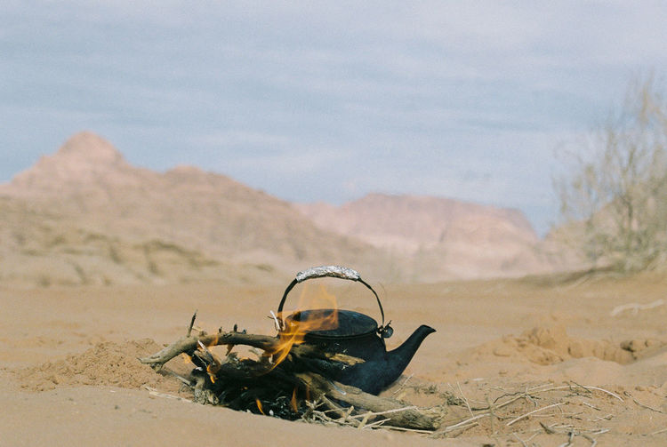 View of horse on sand