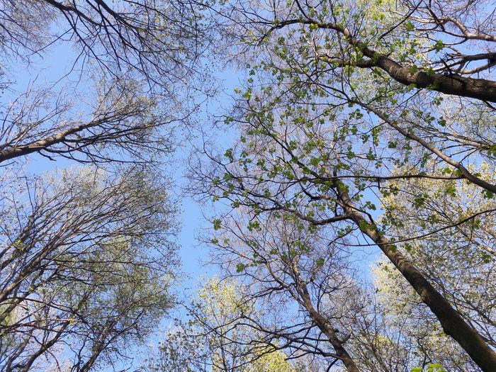 безфильтров деревья Лес🙈 красота💕🌸🌹