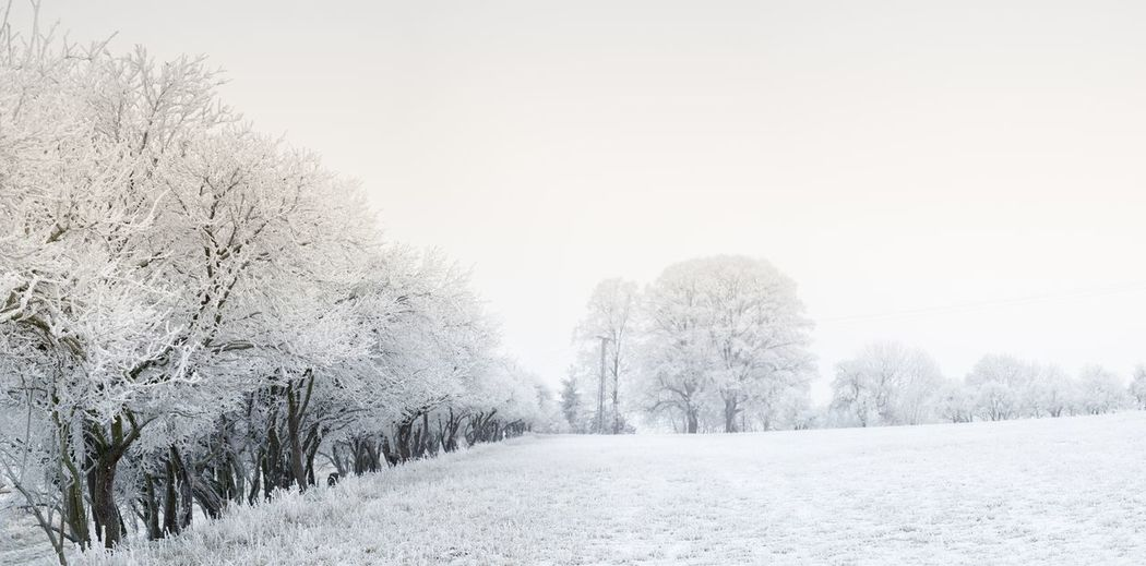 Winter Panoramic 2017 Baum Bäume Eis EyeEm Best Shots Flickr Frozen Himmel Ice Landscape Landscape_photography Landschaft Nature Nature Photography Panorama Panoramic Panoramic Photography Snow ❄ Sony Tree Winter
