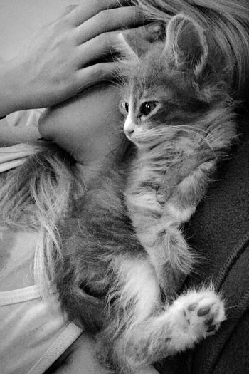 Cat♡ Catsofinstagram Bogota. Buenos Días B&W Portrait