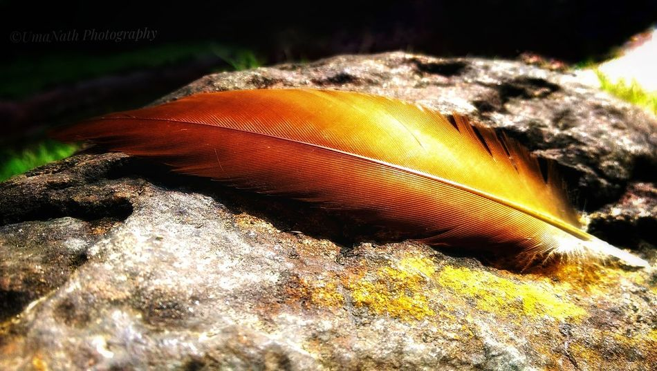Beauty in Nature-Feather EyeEm Best Shots EyeEm Nature Lover EyeEm Selects EyeEm Gallery EyeEm Feather  Feathers Feathers Of A Bird Feather_perfection Rock Rock - Object Rock Formation Rocks UnderSea Sea Life Sand Sunlight Beach Close-up Animal Themes Stone Natural Arch Shining