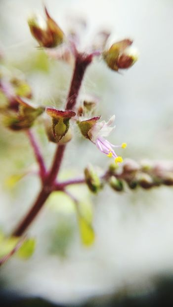 Flower Fragility Close-up Selective Focus Nature Plant Growth