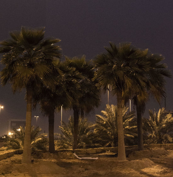 City View  Early Morning Night Photography Palm Tree Groups Palm Trees Riyadh