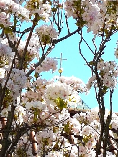 Cross Framed By Blossoms Cross Metal Cross Flower Head Tree Flower Branch Springtime Backgrounds Petal Blossom Apple Blossom Orchard In Bloom Blooming Fruit Tree