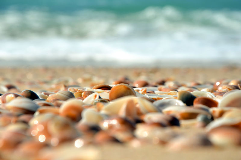 Surface level of shells