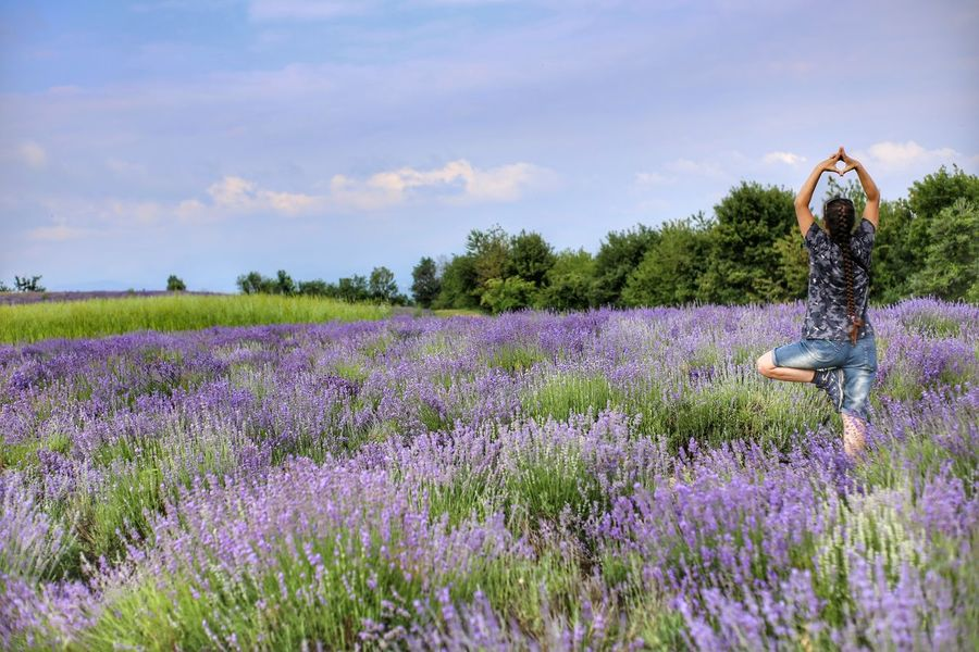 Relaxing Relax Yoga Yoga In Nature Lavander Lavanderfields Flower Perfume Agriculture Flower Head Purple Rural Scene Field Herb Scented Lavender Plant Life Botany Farmland Cultivated Land Agricultural Field