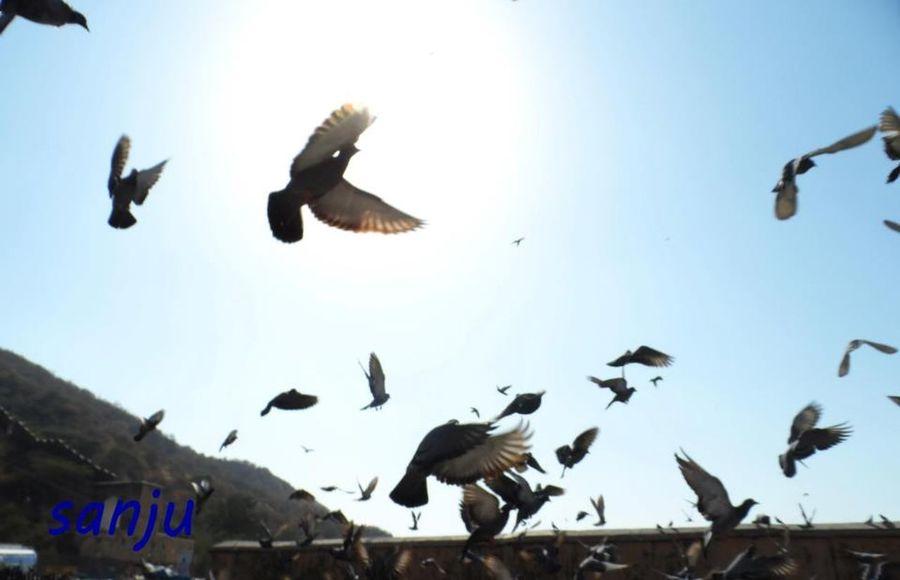 I Want To Fly Fly Flying Uddaan Want To Fly Like A Bird Birds Flying Bird Fliying Birds Photography