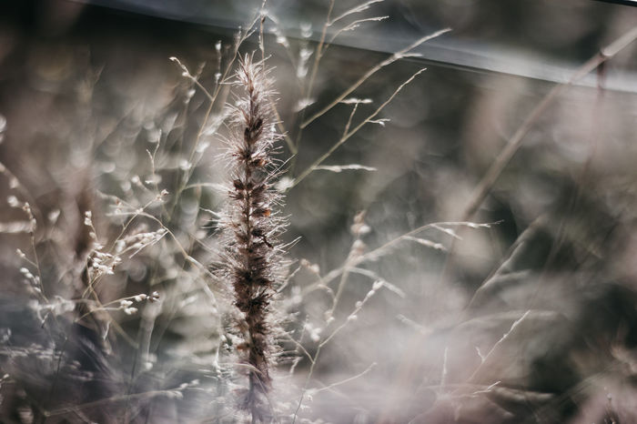 Wild and free Beauty In Nature Close-up Day Dead Plant Dried Dry Field Flower Flowering Plant Focus On Foreground Fragility Freshness Growth Land Nature No People Outdoors Plant Seed Selective Focus Softness Timothy Grass Tranquility Vulnerability