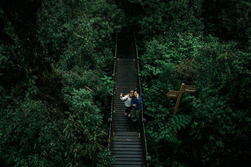 People on footbridge in forest