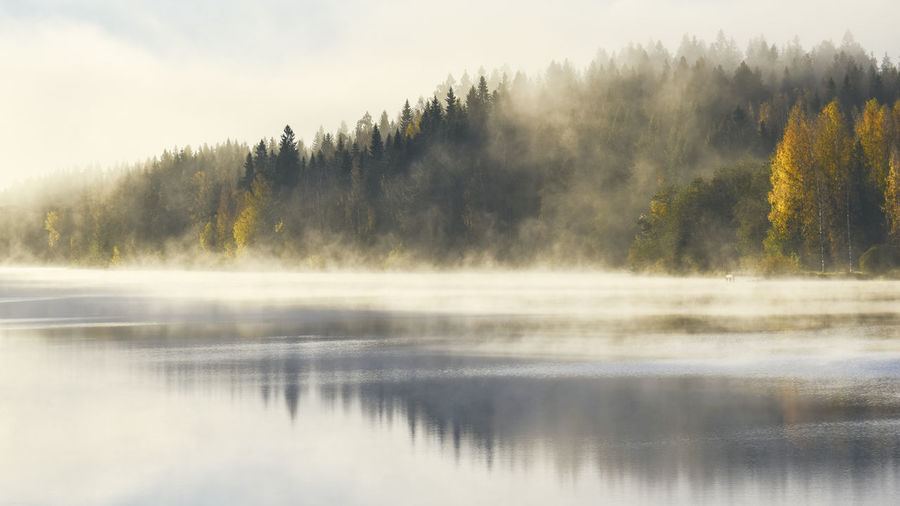 Beauty In Nature Day Fog Forest Hazy  Idyllic Lake Nature No People Non-urban Scene Outdoors Plant Reflection Reflection Lake Scenics - Nature Sky Tranquil Scene Tranquility Tree Water Waterfront My Best Travel Photo