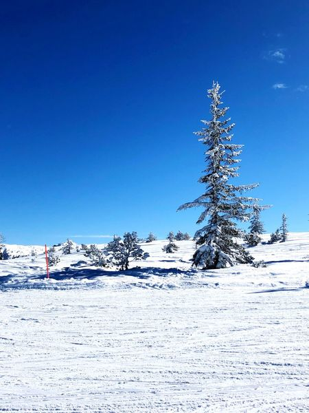 Perfect weather in Austria Winter Cold Temperature Nature Blue Beauty In Nature Tranquility Tree Clear Sky Landscape