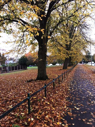 Autumn walk through my town 🍂🍃🍁 Autumn Leaves Nature Colours Beauty In Nature