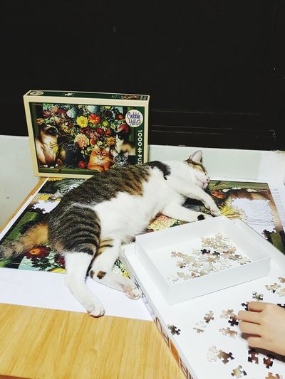 Blooming cat High Angle View Table Paper Domestic Animals Animal Themes Domestic Cat Sleepingcats Catportrait Catandflowers Human Hand Cobble Hills Jigsaw Puzzle Cat Jigsaw One Animal Lifestyles Close-up Cat♡ Cats Of EyeEm Jigsaw3D Pets One Woman Only Fatty Cat