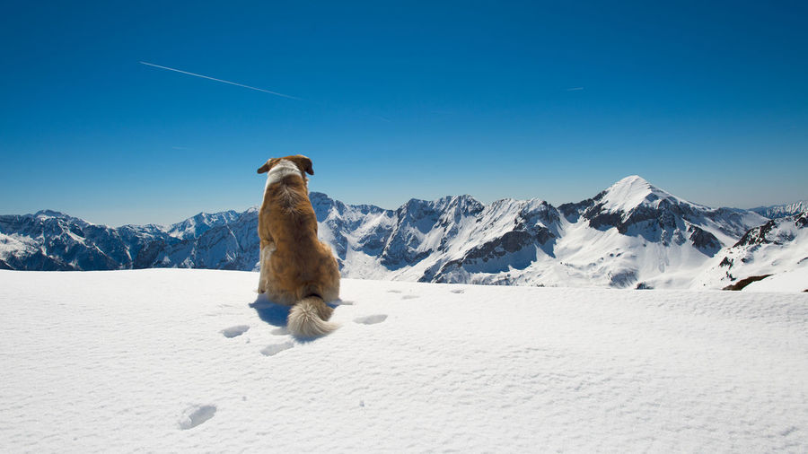 View of horse on snowcapped mountain against blue sky