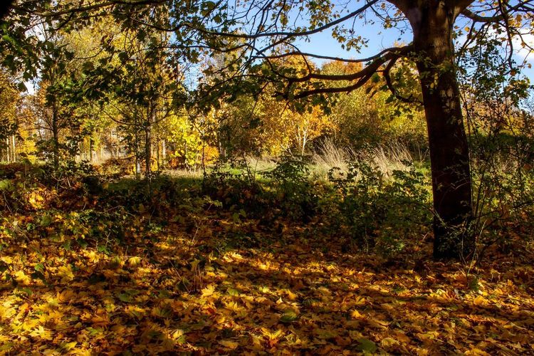 Autumn Colour Plant Tree Growth Nature No People Tranquility Beauty In Nature Day Sunlight Outdoors Land Field Scenics - Nature Full Frame Tranquil Scene Grass Sky Backgrounds Park Branch