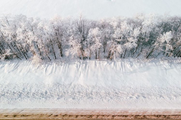 Ski Forest Trip Winter Saint Petersburg Road Winter Cold Temperature Snow No People Nature Day Land Frozen Tree Outdoors My Best Photo My Best Photo