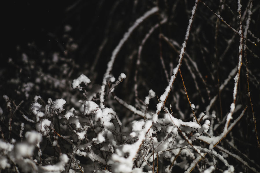 FUJIFILM X-T10 From My Point Of View Beauty In Nature Close-up Cold Temperature Day Fragility Frozen Fujifilm Nature No People Outdoors Snow Snowflake Wasiak Weather Winter Shades Of Winter