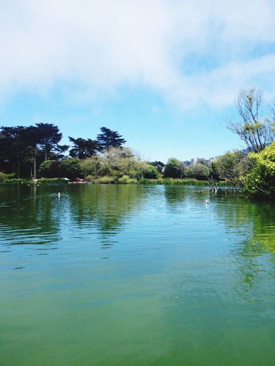 Pure Bliss. San Francisco Goldengatepark Lake Relax