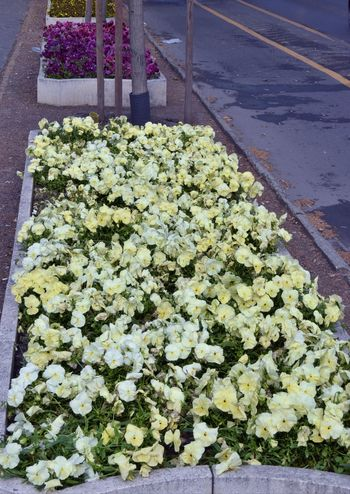 Broadwalk Day Flower Flowerbeds Freshness Growth High Angle View Nature No People Outdoors Plant Road
