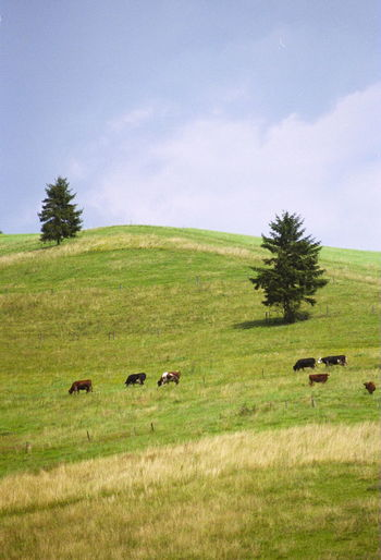 Animal Themes Cloud - Sky Domestic Animals Environment Grass Land Landscape Livestock Sky Village Village View