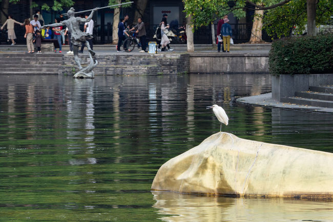 EyeEm Best Shots Water Bird Animal Themes Animal Wildlife Animal Vertebrate Animals In The Wild Reflection Lake Day Nature Waterfront Group Of Animals Architecture Outdoors Built Structure Motion Incidental People