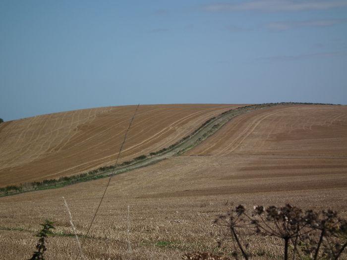 Southdownsway Straw Fields