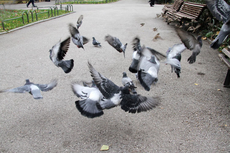 High angle view of birds on the road
