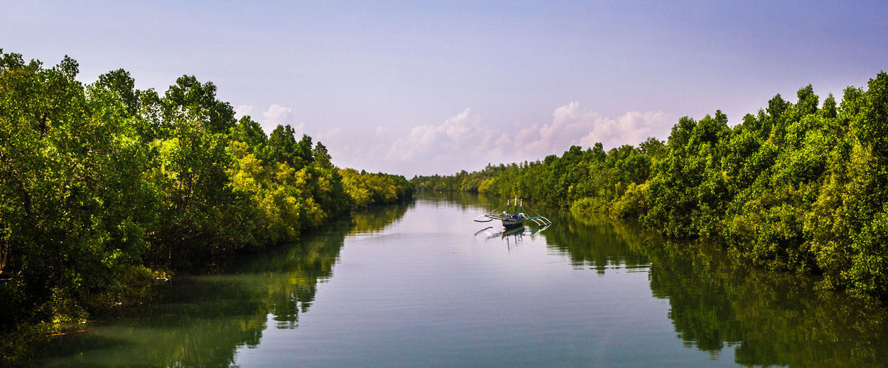 Scenic view of lake amidst  mangrove trees against sky