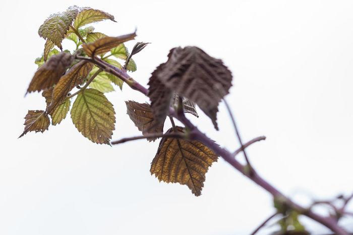 Tom Zander Astronomy Blatt Blätter Branch Johannisbeeren Leaf Leaves Leaves🌿 Nature Struktur Zweig Zweige äste